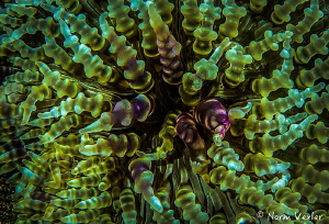 Ocean Art from Anilao by Norm Vexler