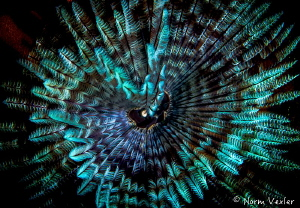 Ocean Art from Raja Ampat by Norm Vexler