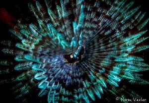 Ocean Art from Raja Ampat by Norm Vexler