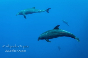 Dolphins in the Blue, Roca Partida México by Alejandro Topete