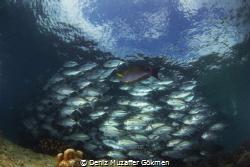 Under the Jack fishes by Deniz Muzaffer Gökmen