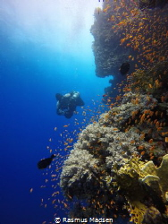 Colors of the Red Sea by Rasmus Madsen