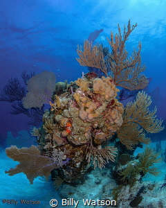Intricate coral stands, snow white sand and crazy clear w... by Billy Watson