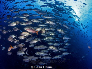 School of Roca by Sean Chinn