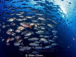 School of Roca by Sean Chinn