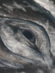 Eye of a Gray Whale.  This was shot in san Ignacio Lago... by James Dorsey