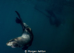 Sea Lion Cub off San Diego giving me the upside-down eye. by Morgan Ashton