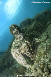 """Submerged archaeological park - """"Baios"""" by Immacolata Moccia"""