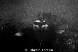 Black shape by Fabrizio Torsani