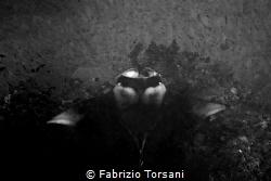 Black shape by Fabrizio Torsani