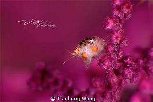 LEAP  by Tianhong Wang