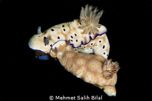 Cuteness. by Mehmet Salih Bilal