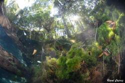 Freshwater ambiant by Raoul Caprez