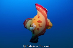 A flying spanish dancer by Fabrizio Torsani