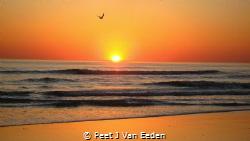 Solo Flight by Peet J Van Eeden