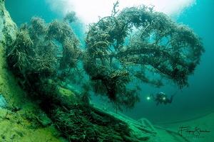 """""""Under the tree"""", Samaranger lake, Austria. by Filip Staes"""