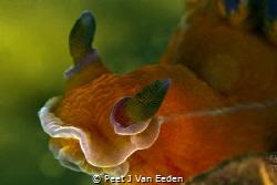 Smack by Peet J Van Eeden