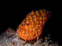 TOUCH DOWN - Janolus sp. by Ton Ghela