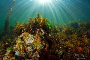 Underwater landscape, Lake Grevelingen, The Netherlands. by Filip Staes