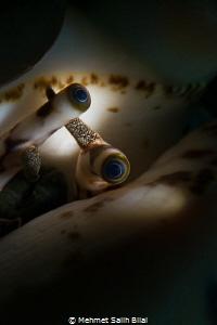 Eyes under the shell. by Mehmet Salih Bilal
