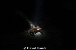 Night dive at Morningtion pier by David Haintz