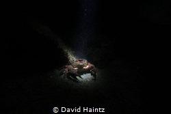 Night dive at Morningtion pier by David Haintz