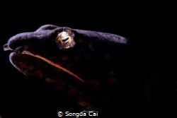 Location: Anilao Batangas   Camera: Canon 5D Mark IV ... by Songda Cai