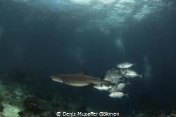 sharks and behinds by Deniz Muzaffer Gökmen