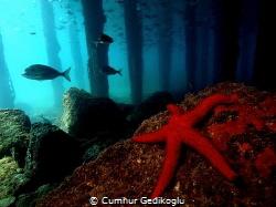 KORUMAR BAY Under the jetty from KUSADASI by Cumhur Gedikoglu
