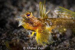 Dragonet by Khaled Zaki