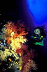 model with lush colours in Red Sea about 6 years ago. I s... by Fiona Ayerst