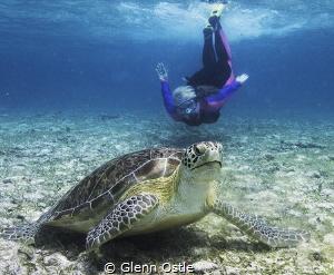 Snorkeling at Spotts Beach, Grand Cayman. by Glenn Ostle