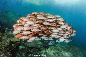 Fish shoal by Leena Roy