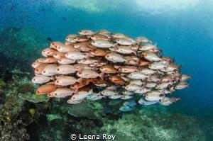 Fish shoal by Leena Roy