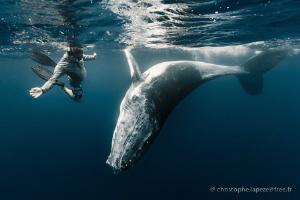Whale calf ballet by Christophe Lapeze
