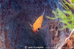 Dive site Lecuan 2 in Bunaken, Indonesia by Lars Kurapka