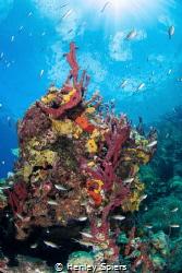 Spongy Reef by Henley Spiers
