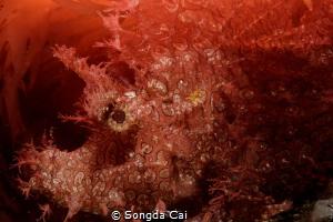 Red  Location: Anilao Batangas  Camera: Canon 5D Mark I... by Songda Cai
