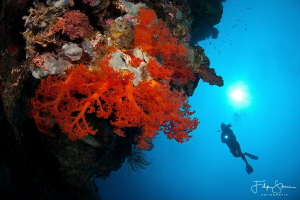 Drop off, Bunaken, Sulawesi. by Filip Staes