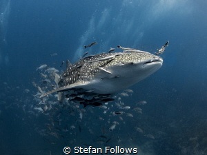 Top Banana! 