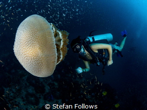 JellyMan