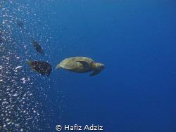 Turtle of Sipadan by Hafiz Adziz