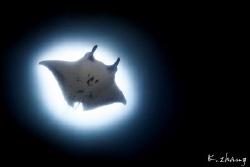 Gotham needs Batman by Jingong Zhang