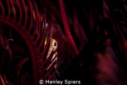 Hide & Seek by Henley Spiers