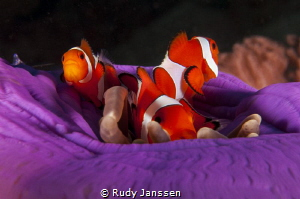 Nemo family by Rudy Janssen