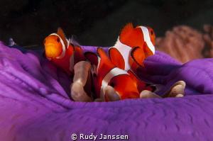 Nemo family by Rudy Janssen