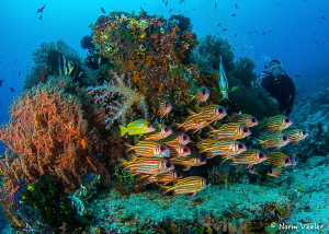 """""""Blue Magic"""" dive site in the Dampier Strait, Indonesia by Norm Vexler"""