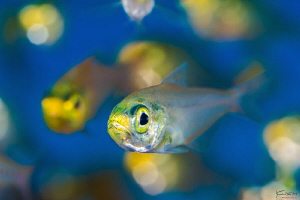 Glass fish bokeh by Kelvin H.y. Tan