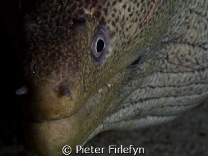 Moray eel by Pieter Firlefyn
