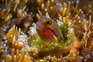 """""""The grass is always greener on the other side"""", Raja Ampat. by Filip Staes"""